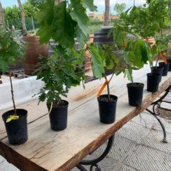 progetto salvare boschi piantine quercia