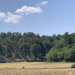 la salvaguardia dei boschi